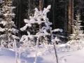 Зима 4