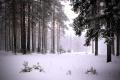Молчит сурово лес уральский...