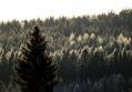 Лес за околицей